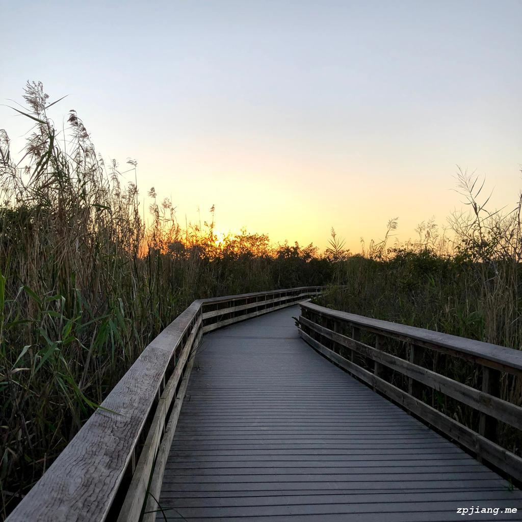 The Anhinga Trail
