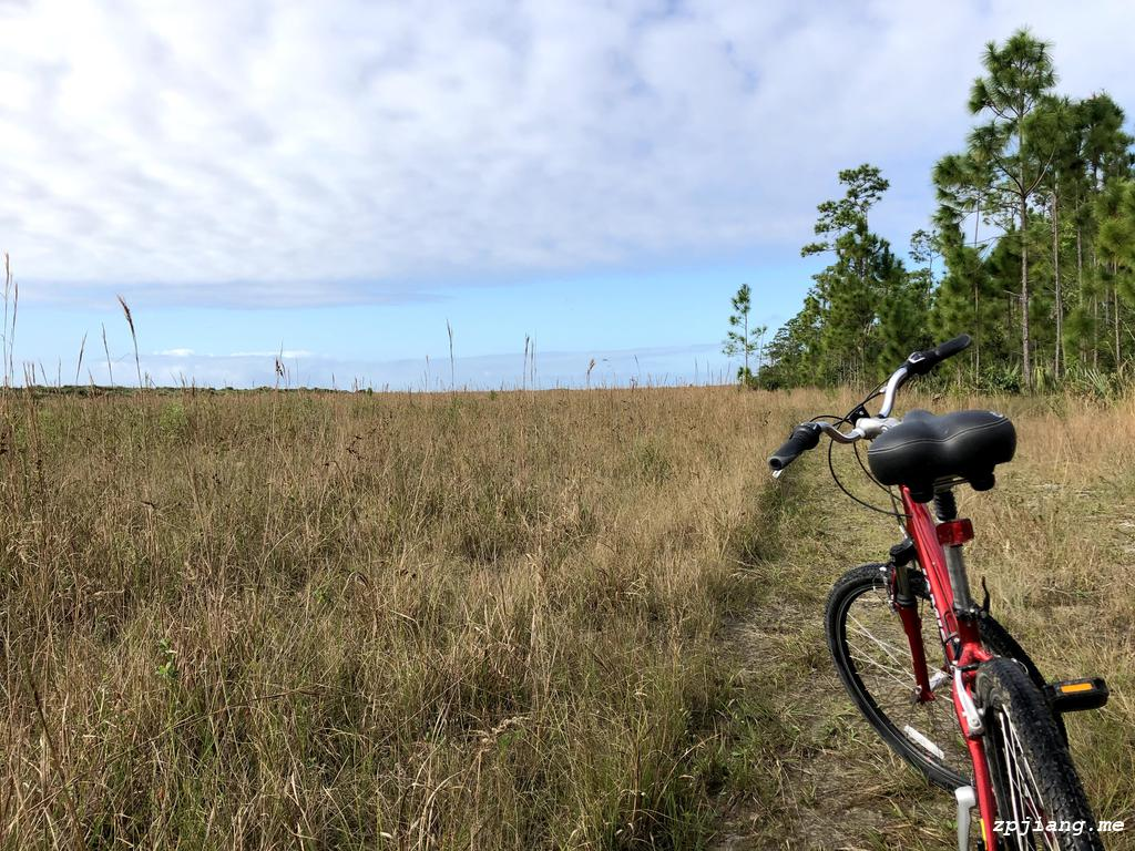Bike and long pine in Everglades National Park.