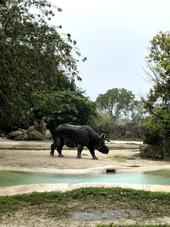 Rhinoceros in the zoo.
