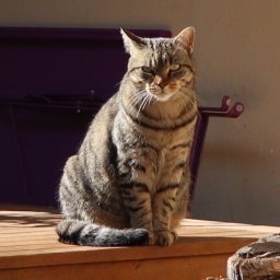 Picture of a cat, sat on a table. (c) Ashley Cave