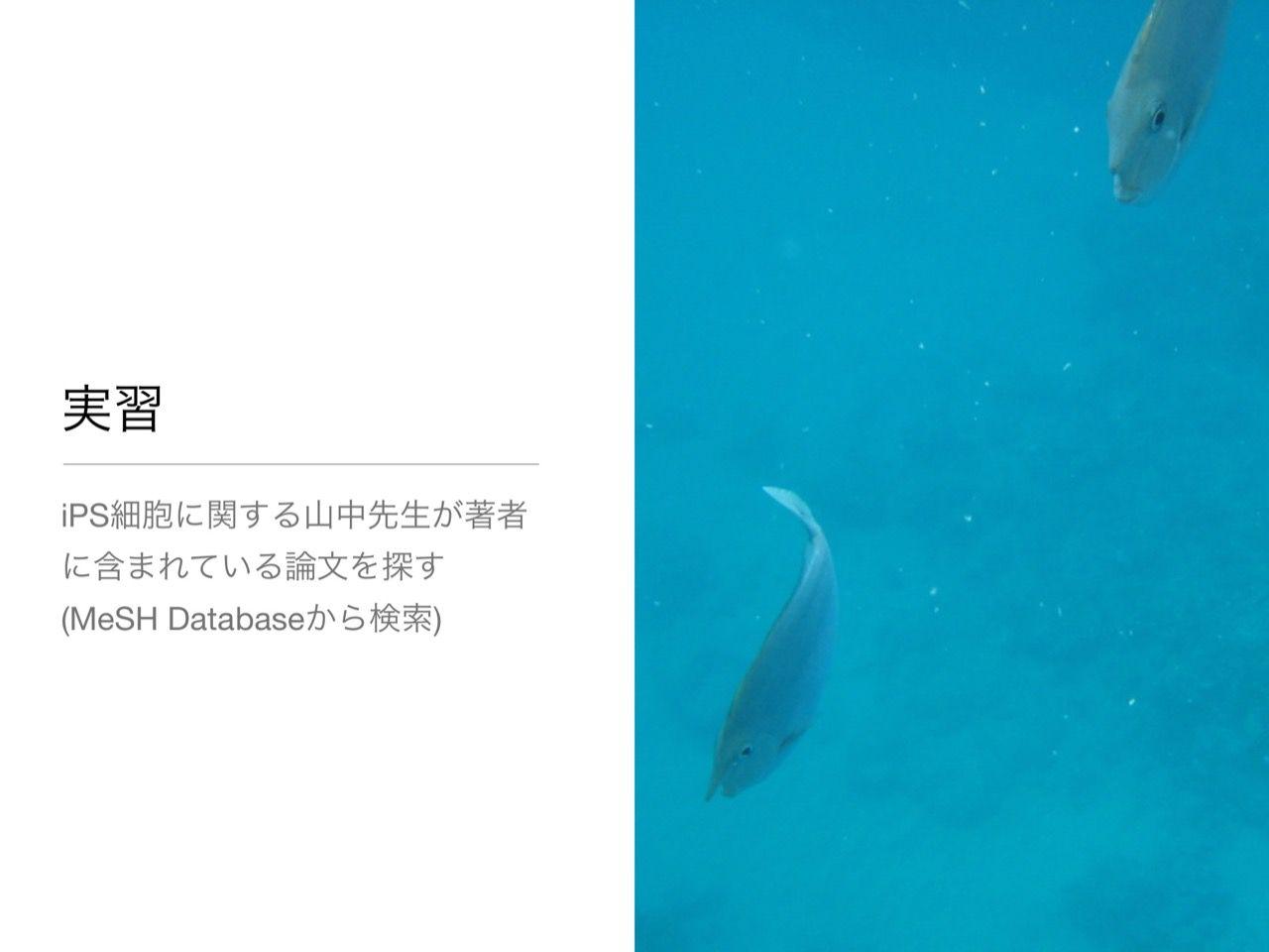 images/AJACS60_yamamoto_032.jpg