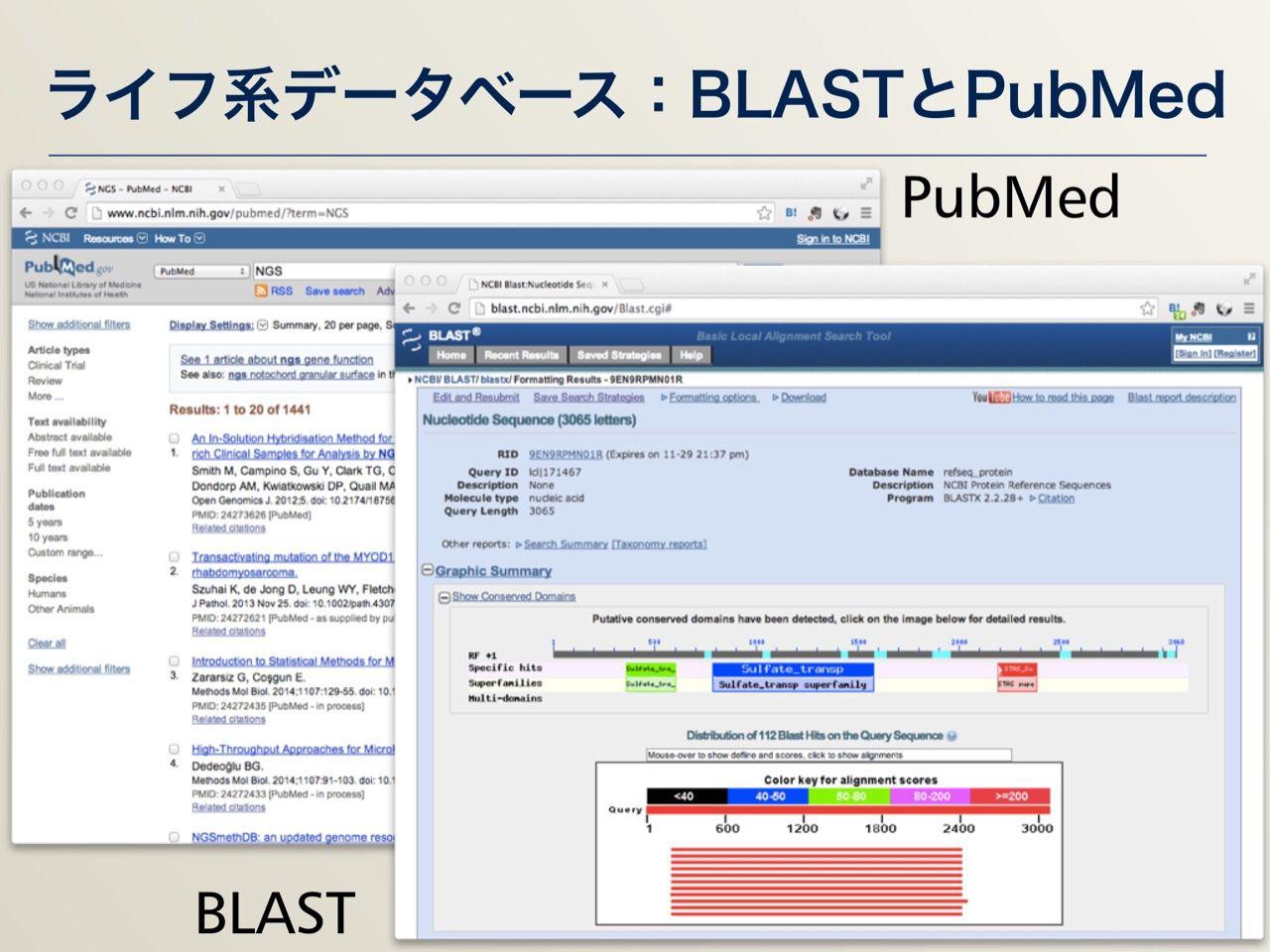 images/AJACS64_03_nakazato_008.jpg
