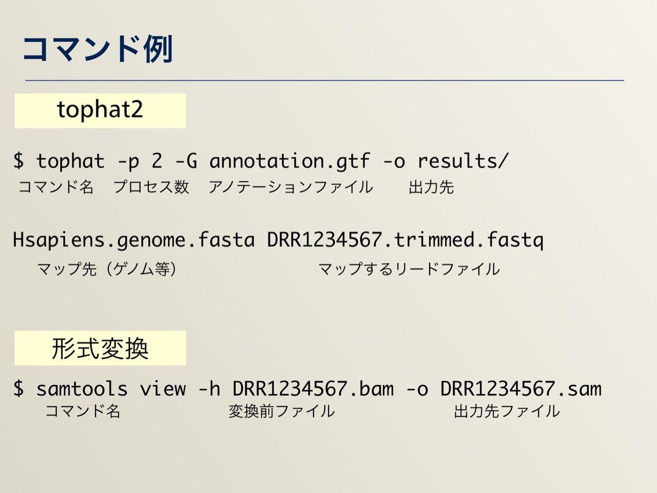 images/AJACS64_04_nakazato_020.jpg