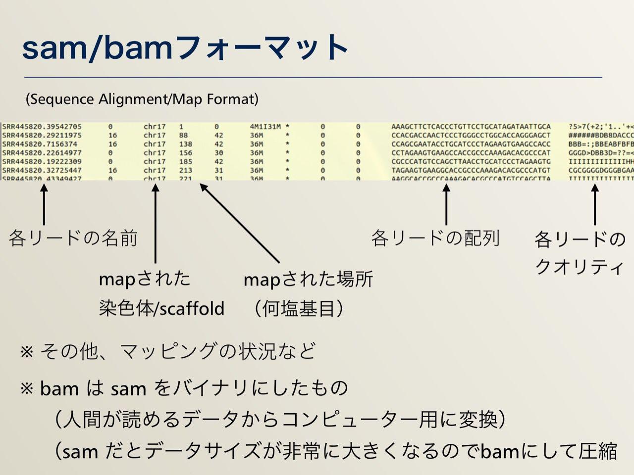 images/AJACS64_04_nakazato_021.jpg