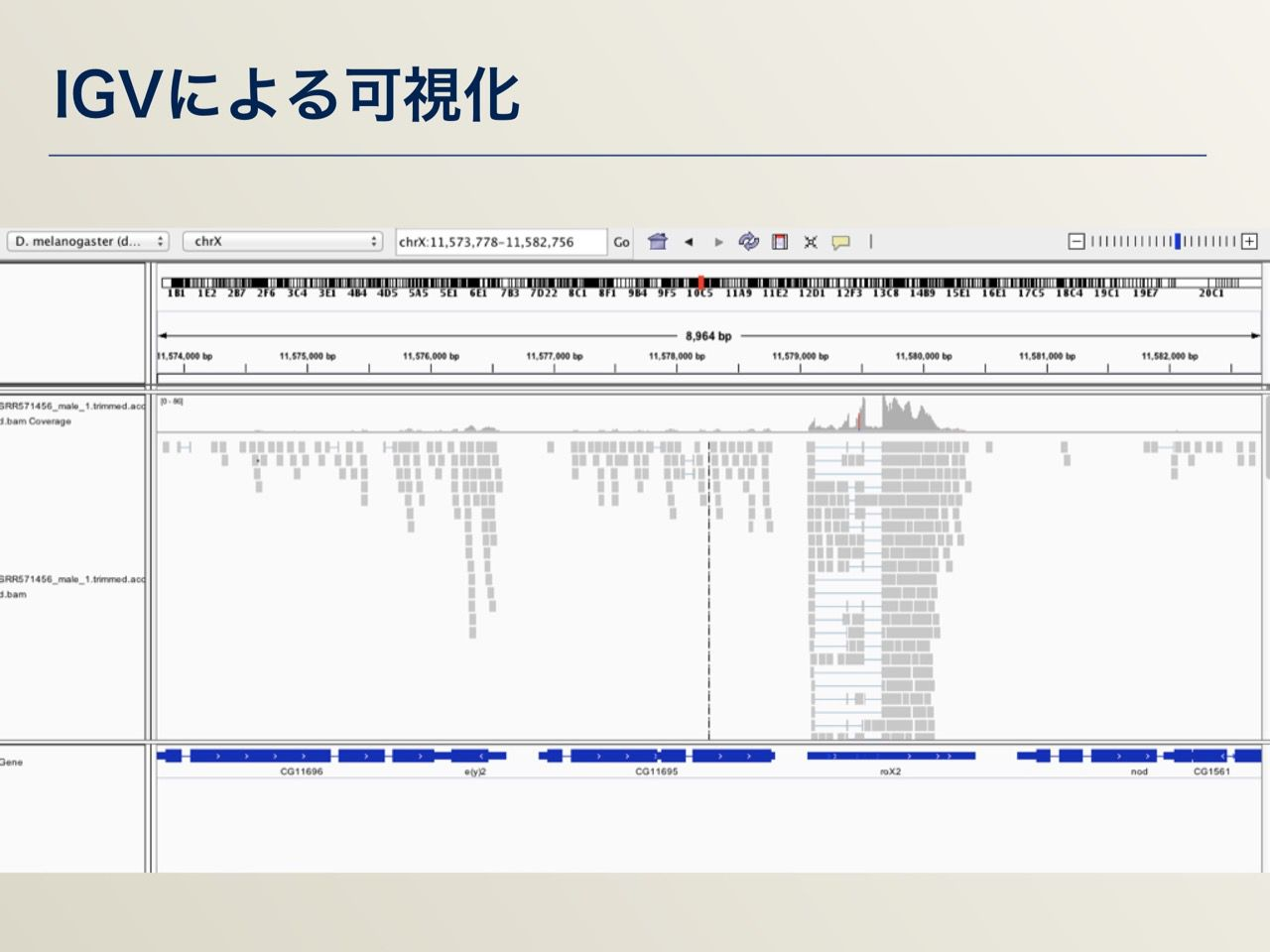 images/AJACS64_04_nakazato_022.jpg