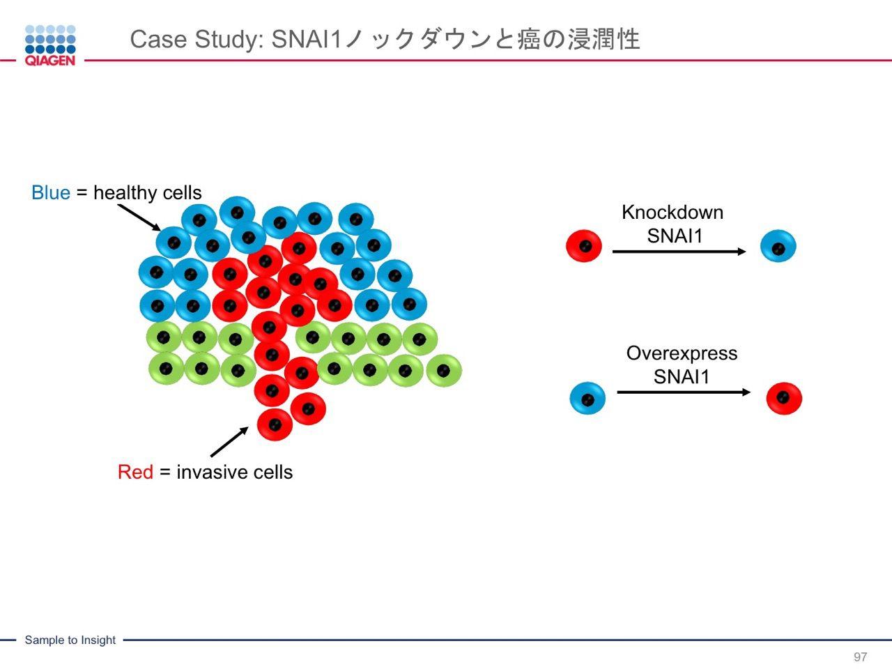 images/AJACSa2_miyamoto_097.jpg