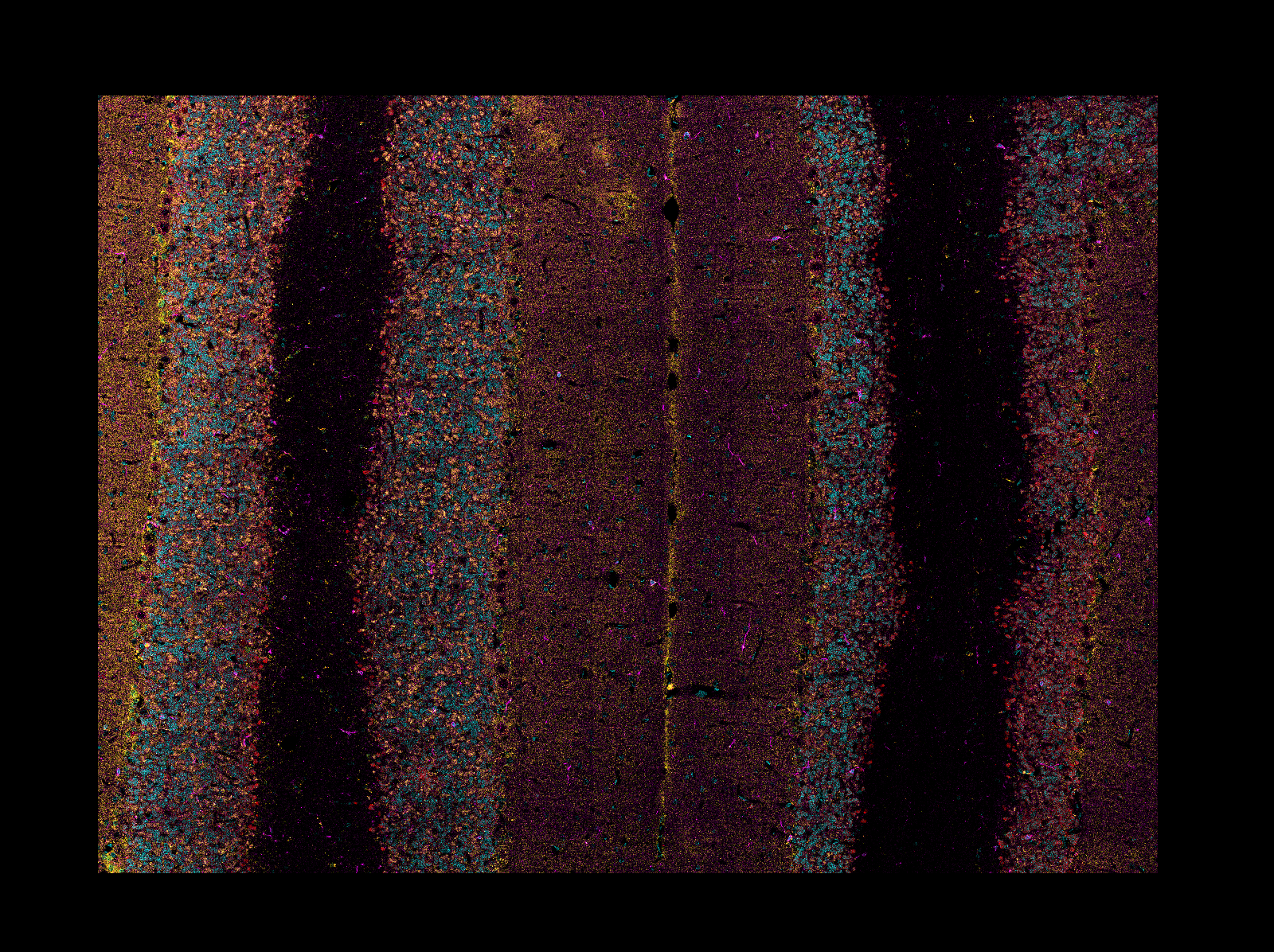 screenshot of a reconstructed / restitched mosaic tile LIF