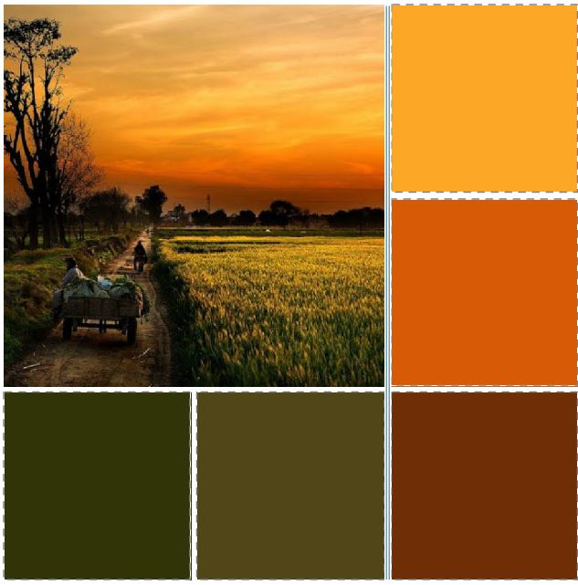 Fields of Punjab