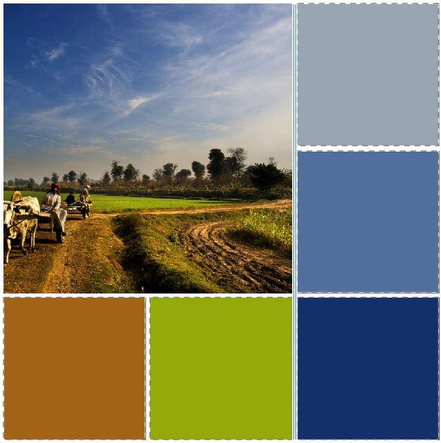 Fields of Punjab 2