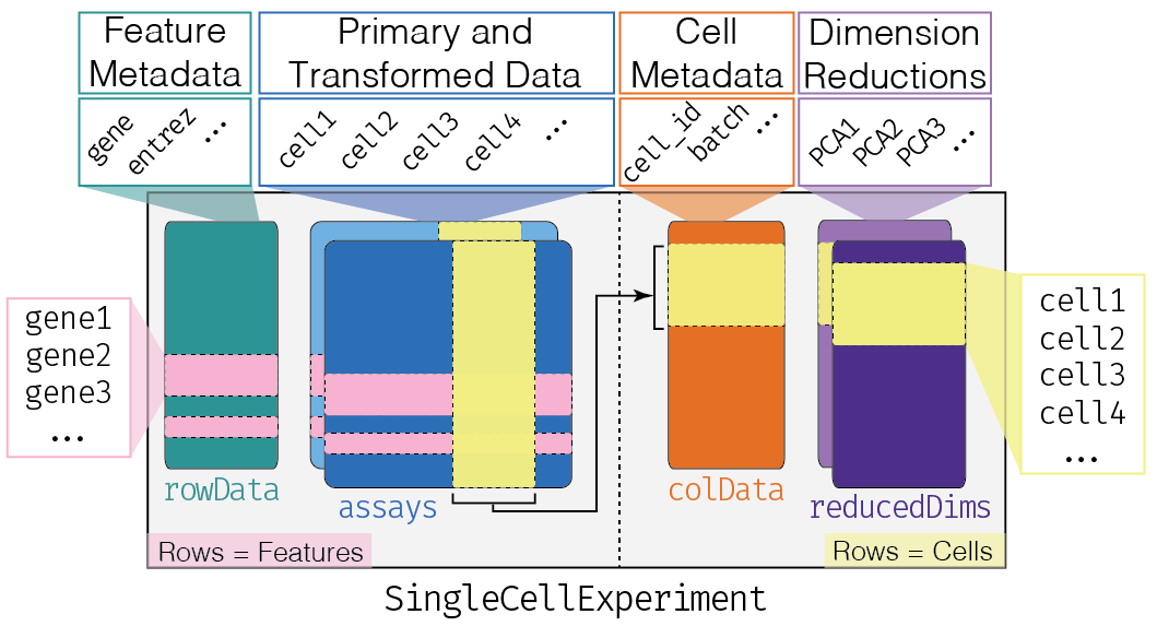Overview of the structure of the `SingleCellExperiment` class. Each row of the assays corresponds to a row of the `rowData` (pink shading), while each column of the assays corresponds to a column of the `colData` and `reducedDims` (yellow shading).