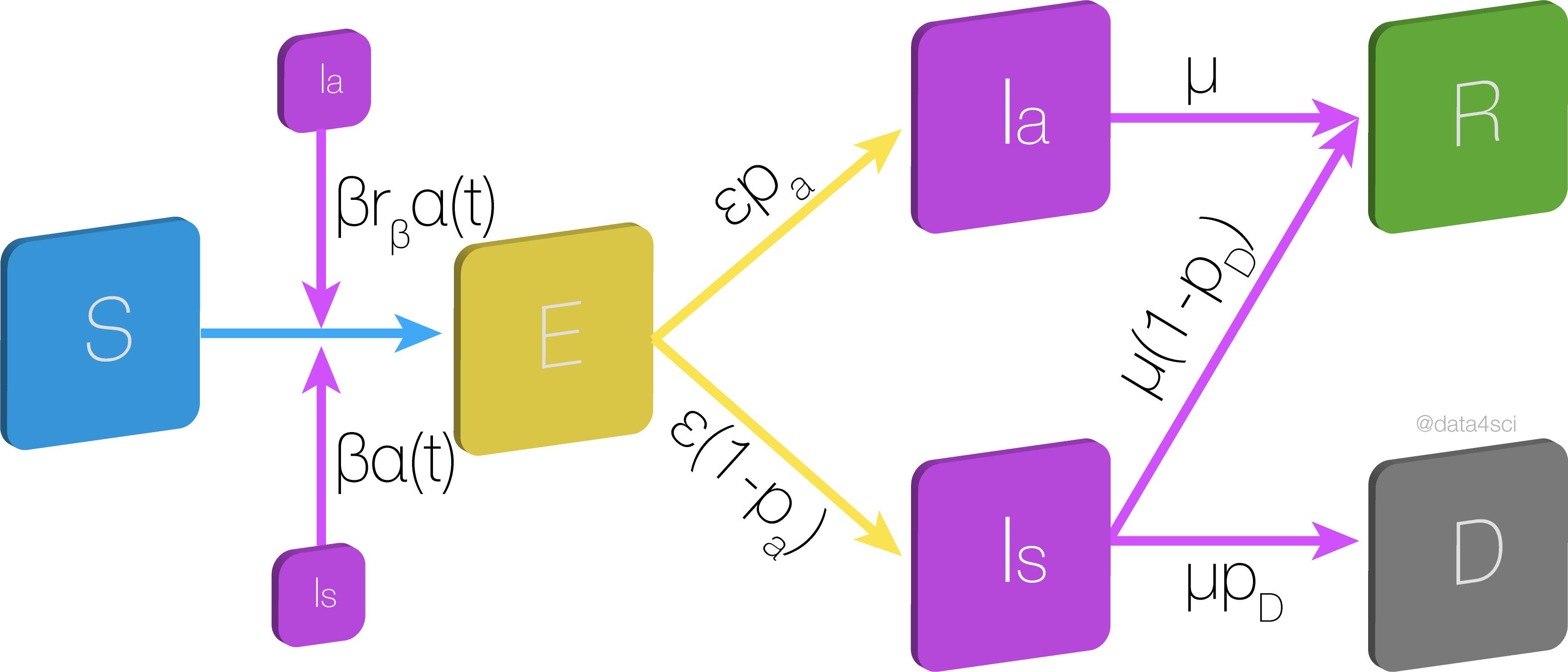 Multipopulation model