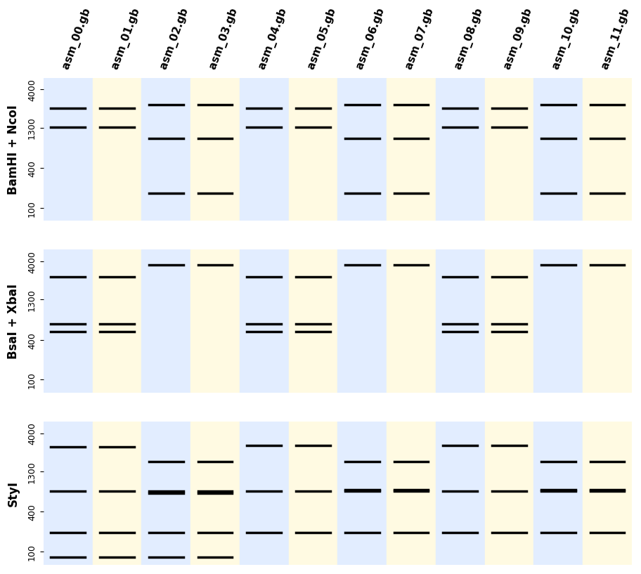 https://raw.githubusercontent.com/Edinburgh-Genome-Foundry/BandWagon/master/examples/plot_all_digestion_patterns.png
