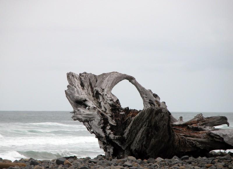 Driftwood, Wikimedia Commons.