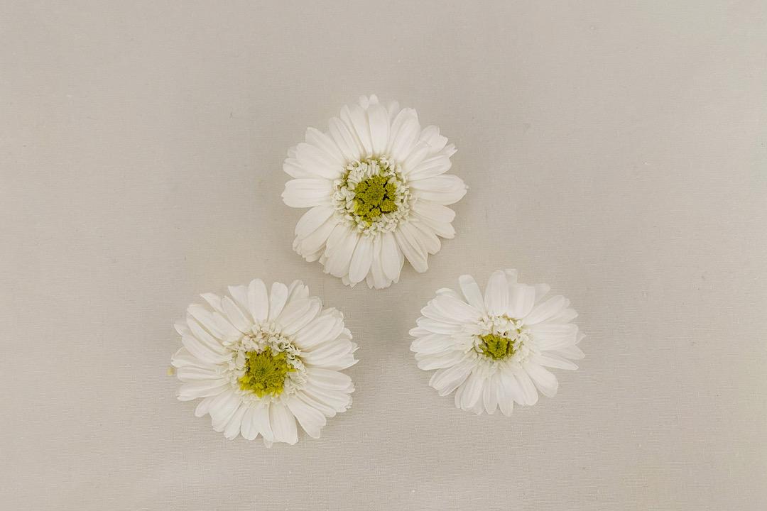 set de 3 barrettes lily