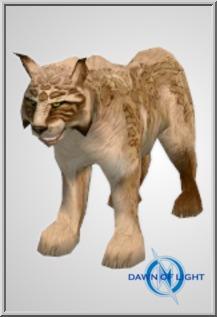 Grass Lynx