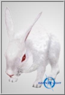 amb_rabbit