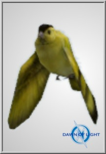 amb_bird