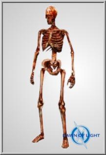 Large Skeleton