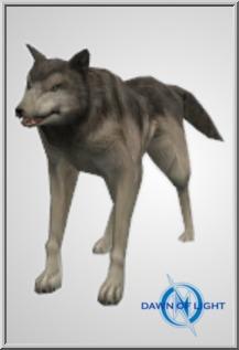 Small Grey Wolf
