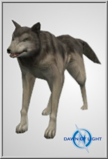 Large Grey Wolf