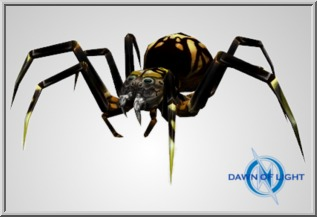 Large Black Spider