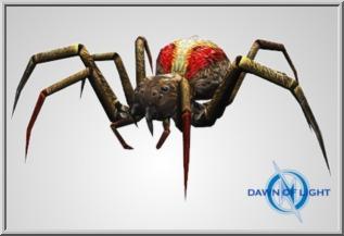 Large Brown Spider