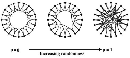 Construction of a Watts-Strogratz model network