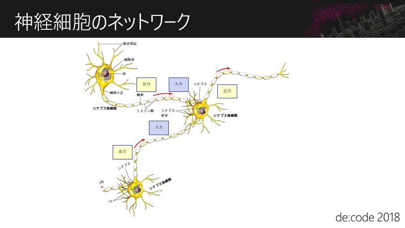 神経細胞のネットワーク