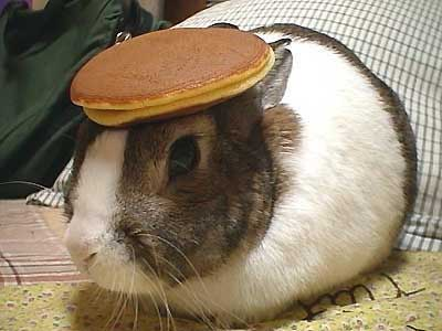 Rabbit with a pancake on its head.