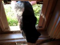 Cat Door Cat Door