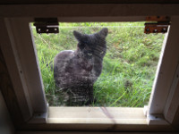The Cat Door We Built And Installed As A Replacement For Our Basement  Window Was Kind Of A Temporary Solution. At First We Had Simply Thought We  Would ...