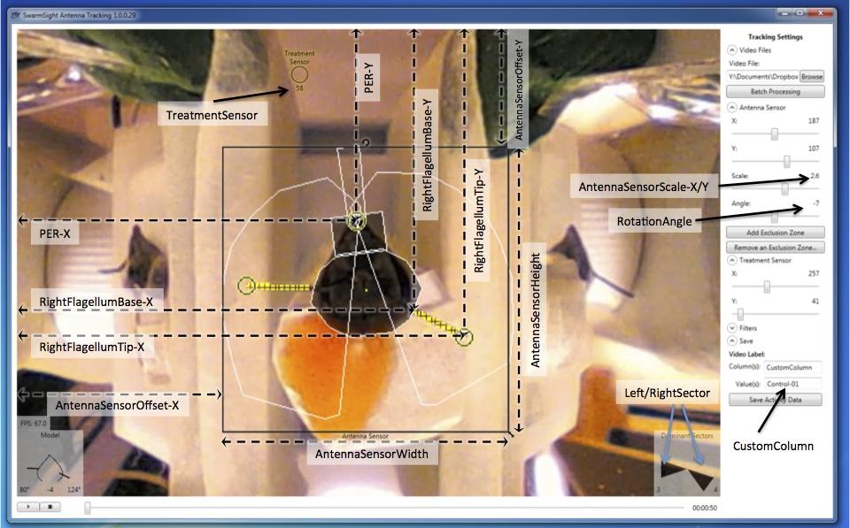 SwarmSight Antenna Proboscis Tracking Column Descriptions