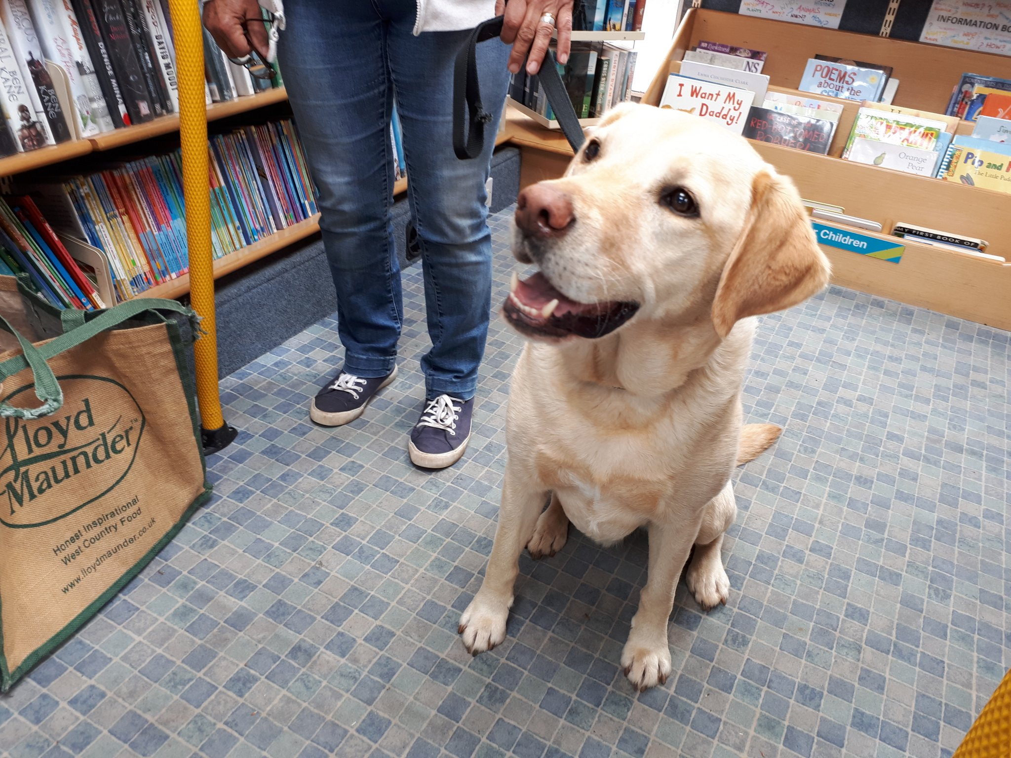 A labrador sittng nicely in a mobile library
