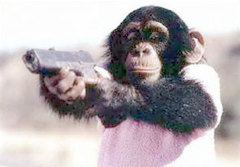 Don't mess with us Monkeys! ;)