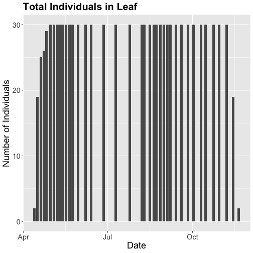 In the previous step, we filtered our data by date to only include data from 2018. Reviewing the newly generated dataset we get a bar plot showing the count of Liriodendrum tulipifera (LITU) individuals at the Smithsonian Conservation Biology Institute (SCBI) for the year 2018. Counts represent individuals that were recorded as a 'yes' for the phenophase of interest,'Leaves', and were from the primary plots.