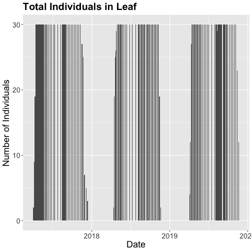 Bar plot showing the count of Liriodendrum tulipifera (LITU) individuals from January 2017 through December 2019 at the Smithsonian Conservation Biology Institute (SCBI). Counts represent individuals that were recorded as a 'yes' for the phenophase of interest,'Leaves', and were from the primary plots. Axis labels and title have been added to make the graph more presentable.