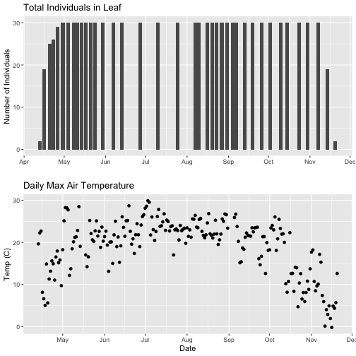 Graphic of the arranged plots created in the previous steps with only the data that overlap. This was achieved by filtering the daily max temperature data by the observation date in the total individuals in Leaf dataset. The top plot shows a bar plot of the counts of Liriodendrum tulipifera (LITU) individuals at the Smithsonian Conservation Biology Institute (SCBI) for the year 2018. The bottom plot shows a scatter plot of daily maximum temperatures(of 30 minute interval means) for the year 2018 at the Smithsonian Conservation Biology Institute (SCBI).