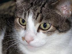 https://github.com/ParhamP/altify/blob/master/images/cat.jpg?raw=true