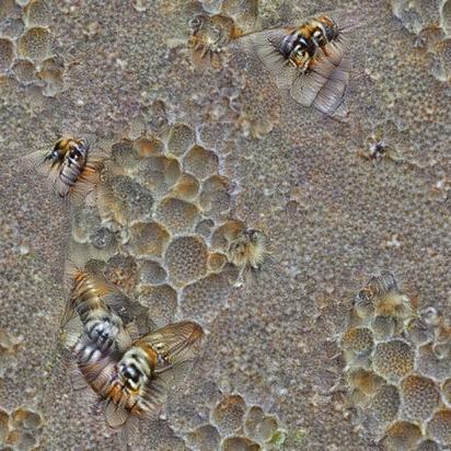 ResNet50 Bees