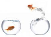 image de poisson
