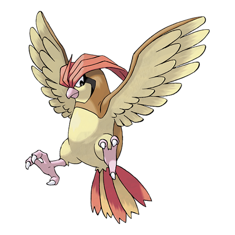 Pokémon pidgeotto