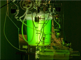 A spirulina reactor from blablaLab in Spain