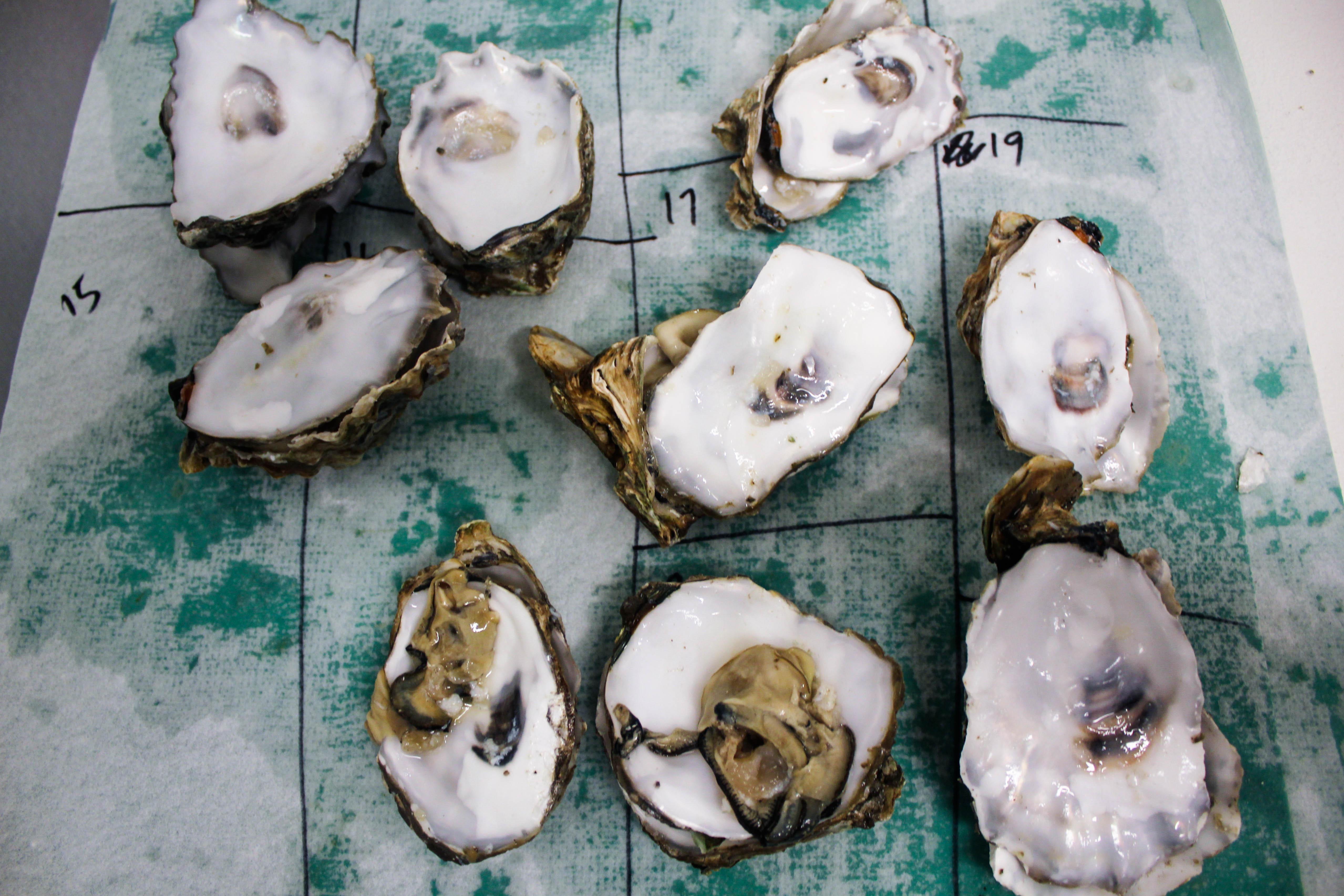 oyster organization