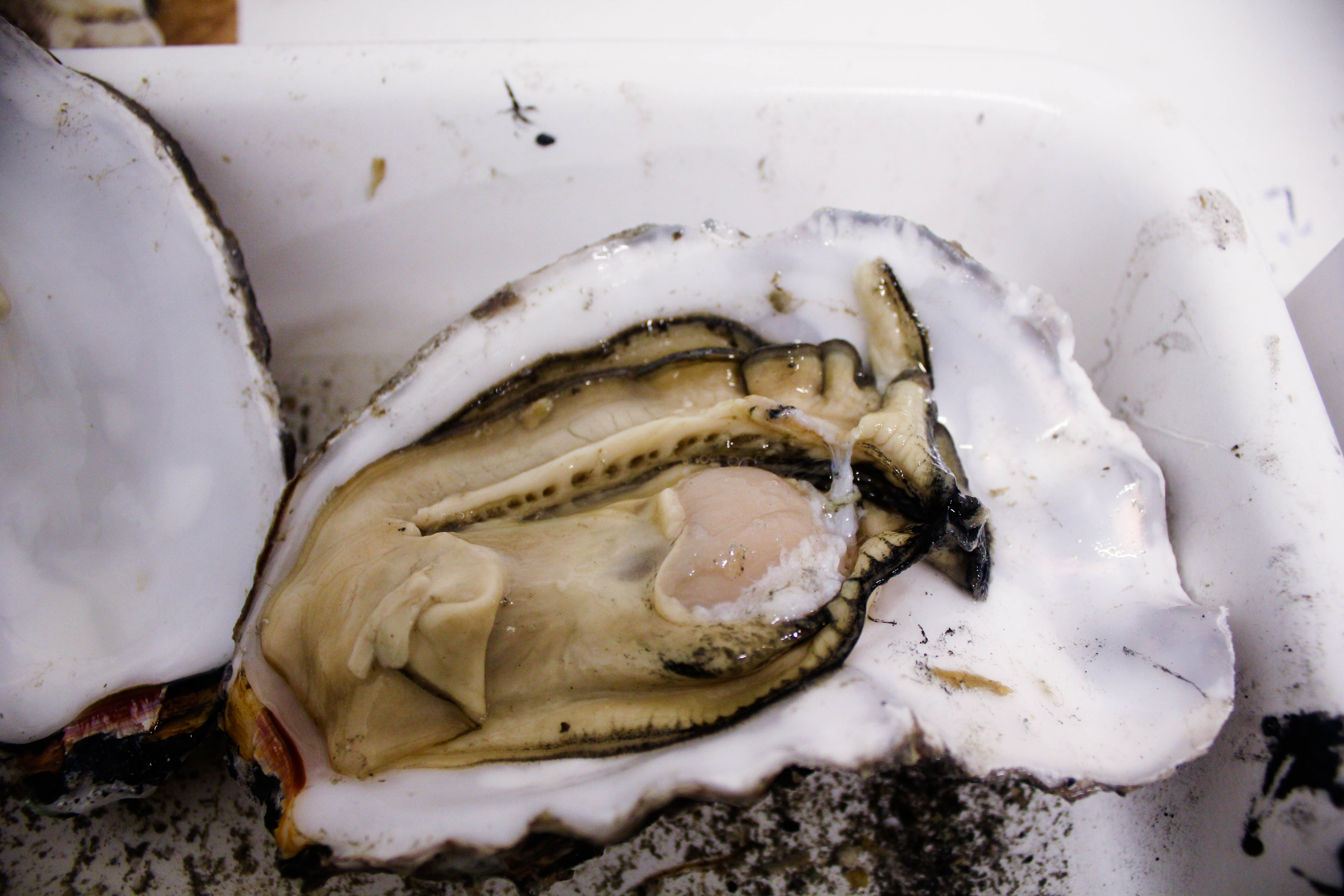 perfect oyster