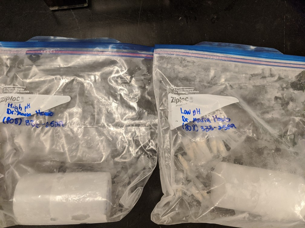 two bags of frozen tissues, low and high pH