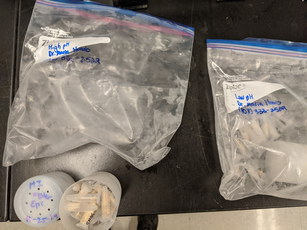 high pH samples removed from bag