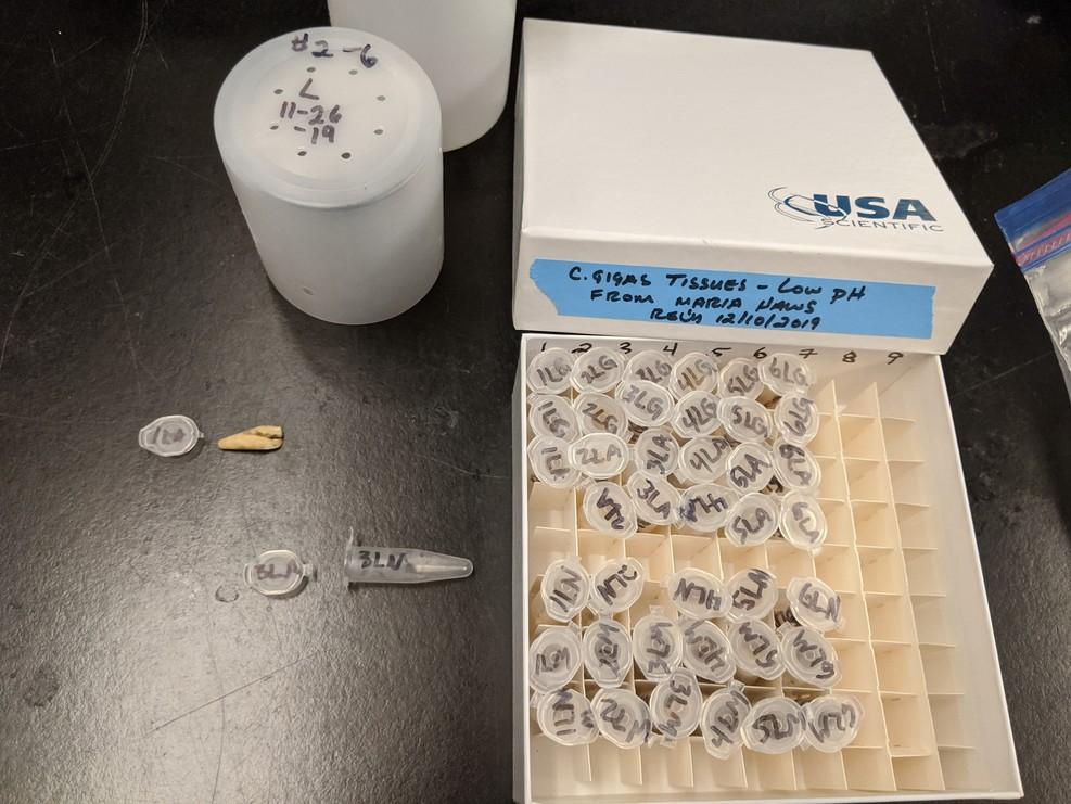 low pH samples in freezer box