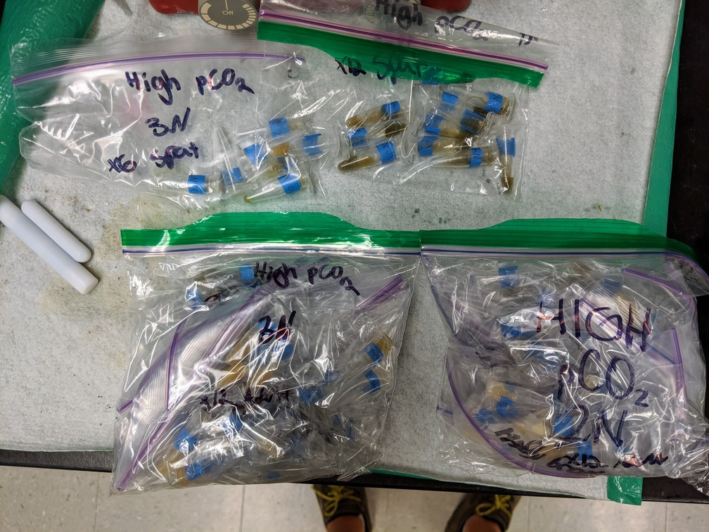 Four labeled bags containing sample tubes