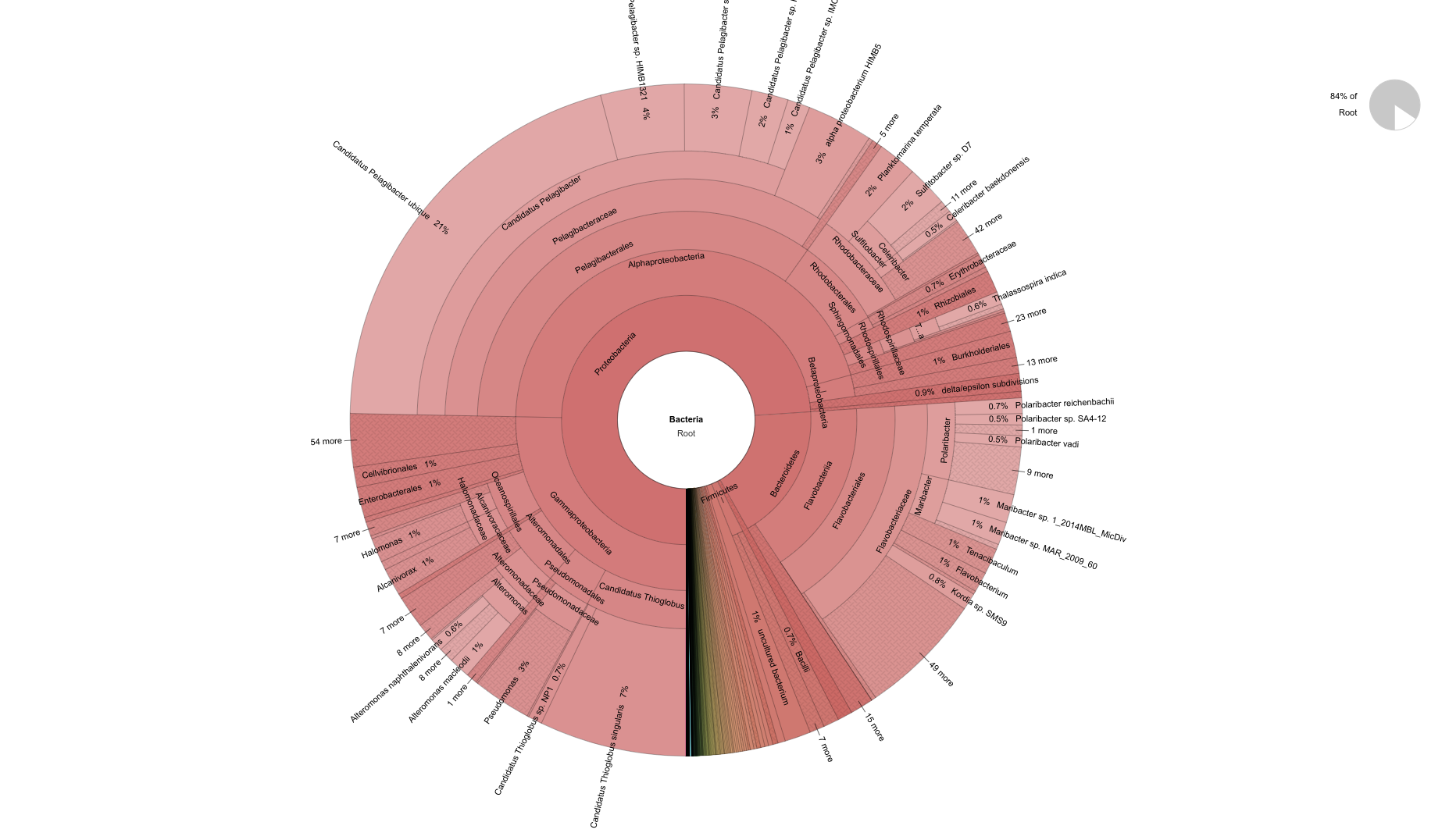 pH=8.2 bacteria krona plot