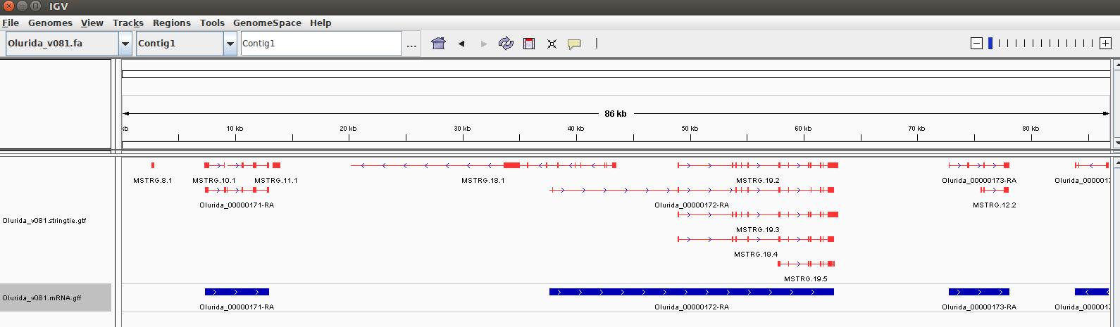 IGV screencap showing Strintie isoforms